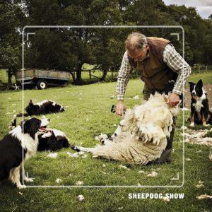 Sheep Dog Show